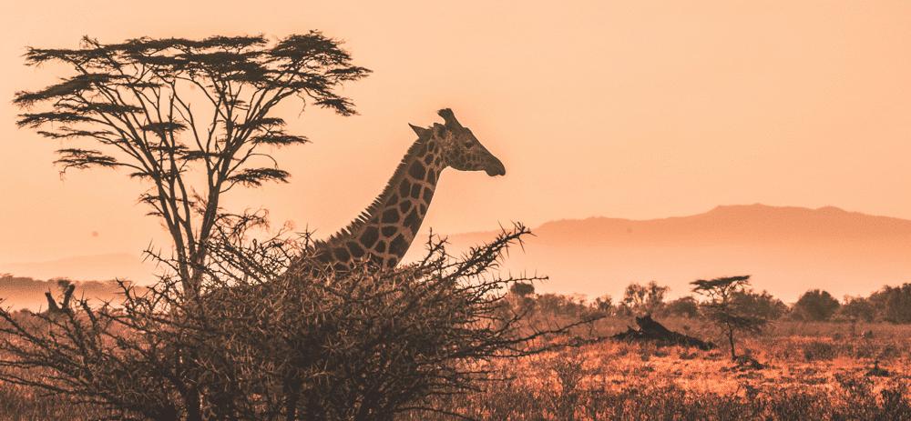 Nettikasinot Afrikka